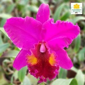venda de orquídeas direto do produtor